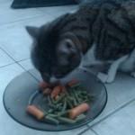 Pisicile vegetariene