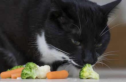 Cum sa devii vegetarian
