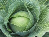 Varza: proprietatile de exceptie ale unei legume banale
